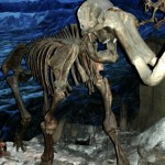 The Steppe Mammoth