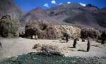 Tibetan hardvest