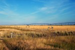 Farming Fields Alberta