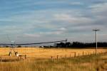 Farming Fields, Alberta