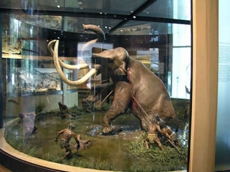 Mammoth at The National Museum of Anthropology, Mexico City, DF