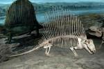 Dimetrodon, Royal Tyrrell Museum