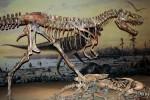 Albertosaurus, Royal Tyrrell Museum