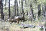 Deer Park Arrow Lakes Castlegar
